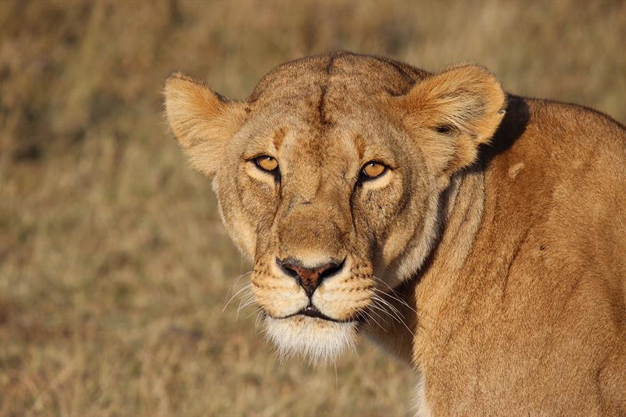 safari-oppoprtunity-inset-02