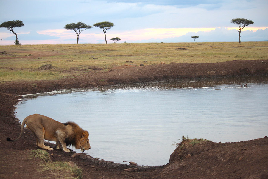 safari-oppoprtunity-inset-03